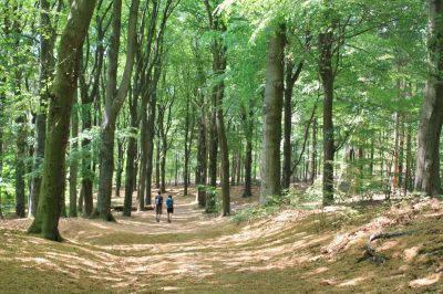 Drieluik Chi Walking, wandelen op de Vughtse Heide bij Den Bosch
